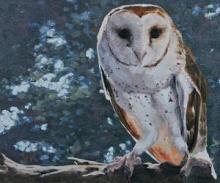 Joel Kratter Owl